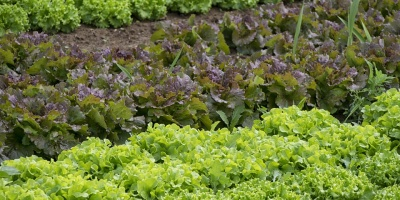 Το ΑΠΘ προσφέρει λαχανόκηπους στους κατοίκους της Θεσσαλονίκης