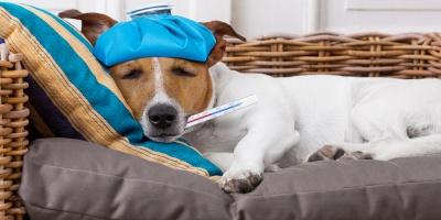 Σημάδια ότι πρέπει να πάτε τον σκύλο σας στον κτηνίατρο